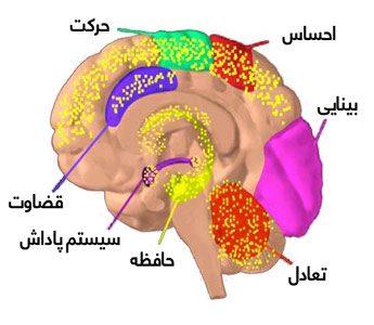 اثرات سوءمصرف حشیش بر مغز