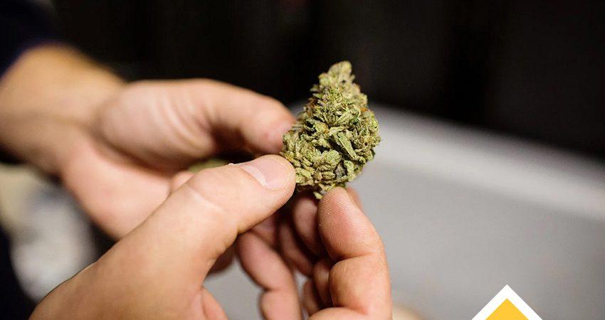 ماریجوانا و اعتیاد جوانان
