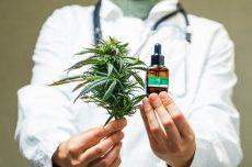 گیاه ماریجوانا چیست